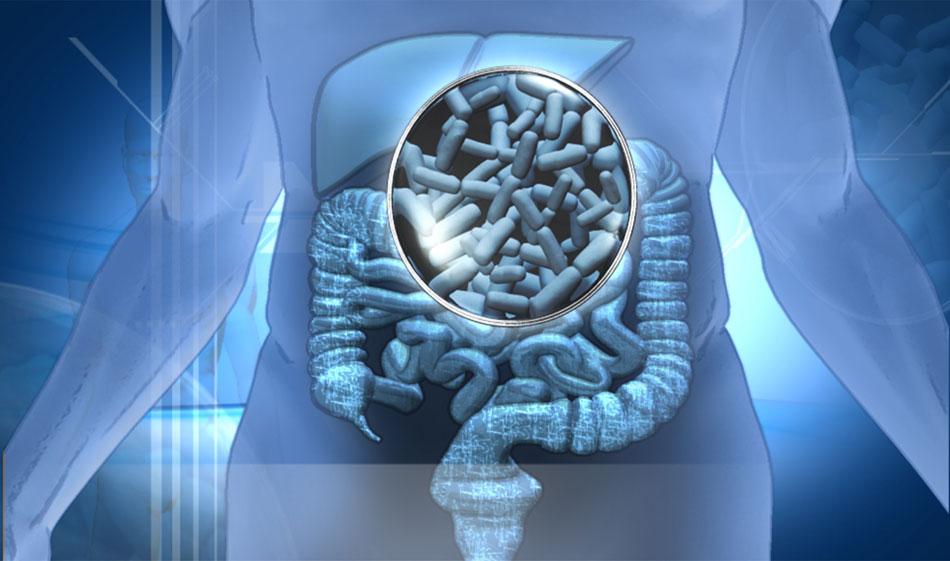 probioticos-organismo